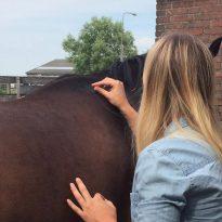 Acupunctuur paard/groot dier